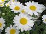 꽃사진1(10,4,6,화)