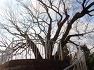 고성 가볼만한 곳- 고성 삼덕리 느티나무
