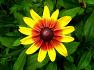 여름철 꽃들 감상하세요