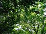 낙동제방 벚꽃길 산책
