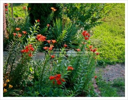 여름초대, 한조각의 자유~ 핑거푸드 만들기