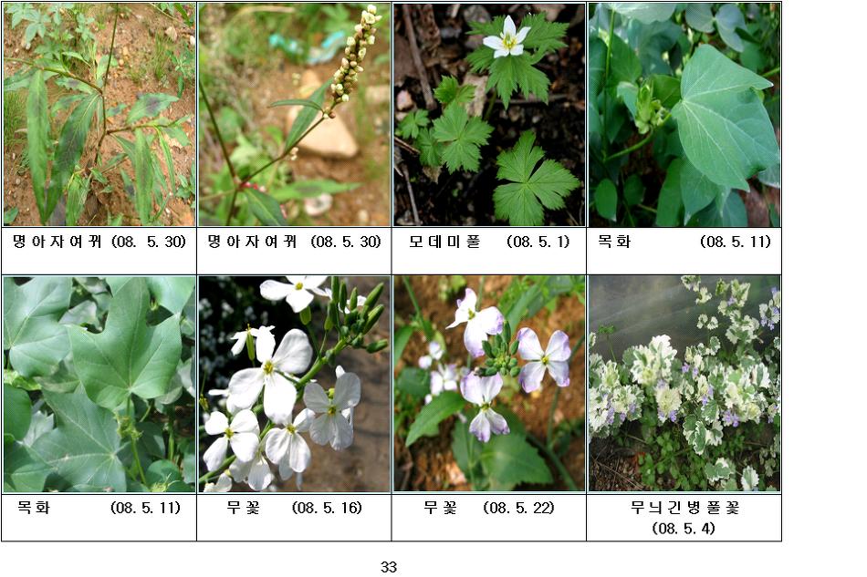 봄에 피는 야생화(5월-9)