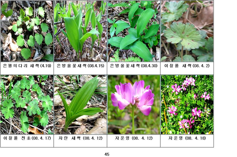 봄에 피는 야생화(4월-12)