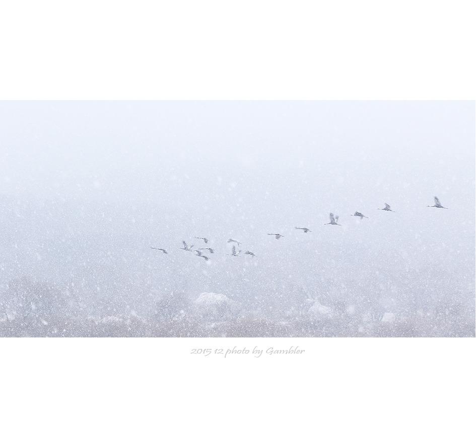 눈오는 날의 두루미 비행