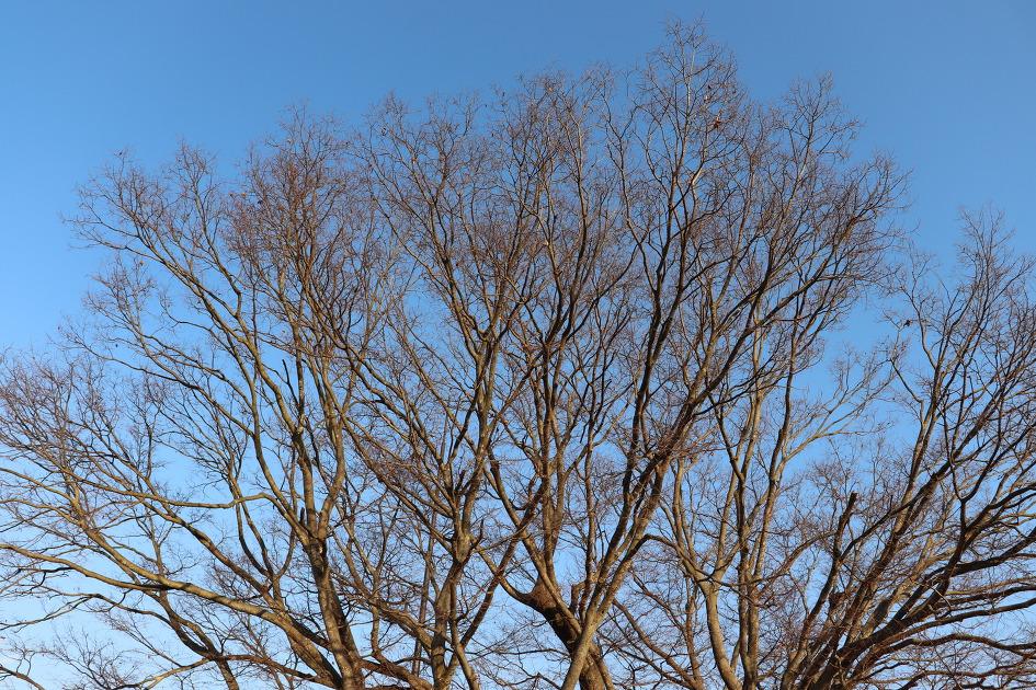 합천 야로면의 느티나무
