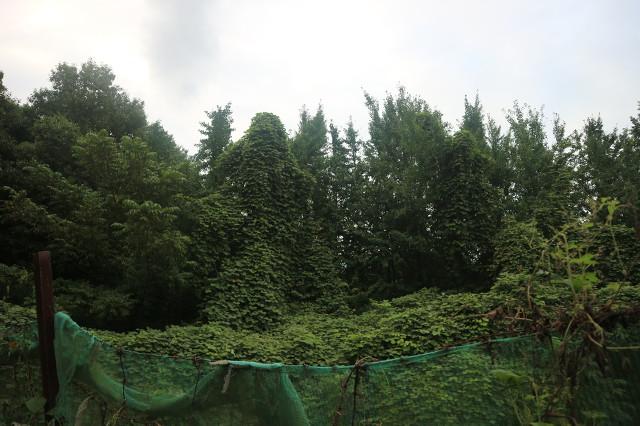 폭우 그친 뒤 산중 텃밭 주변 풍경^^